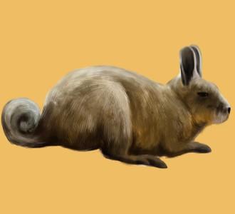 Viscacha - Fell 52