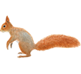 Baumhörnchen - Fell 41