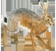 Brauner Hase - Fell 69
