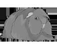 Peruaner-Meerschweinchen - Fell 1340000007